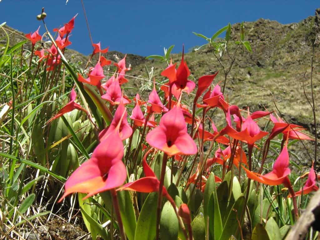 orchids-peru-adventure