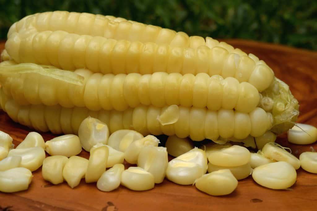 choclo-peruano-corn-cob