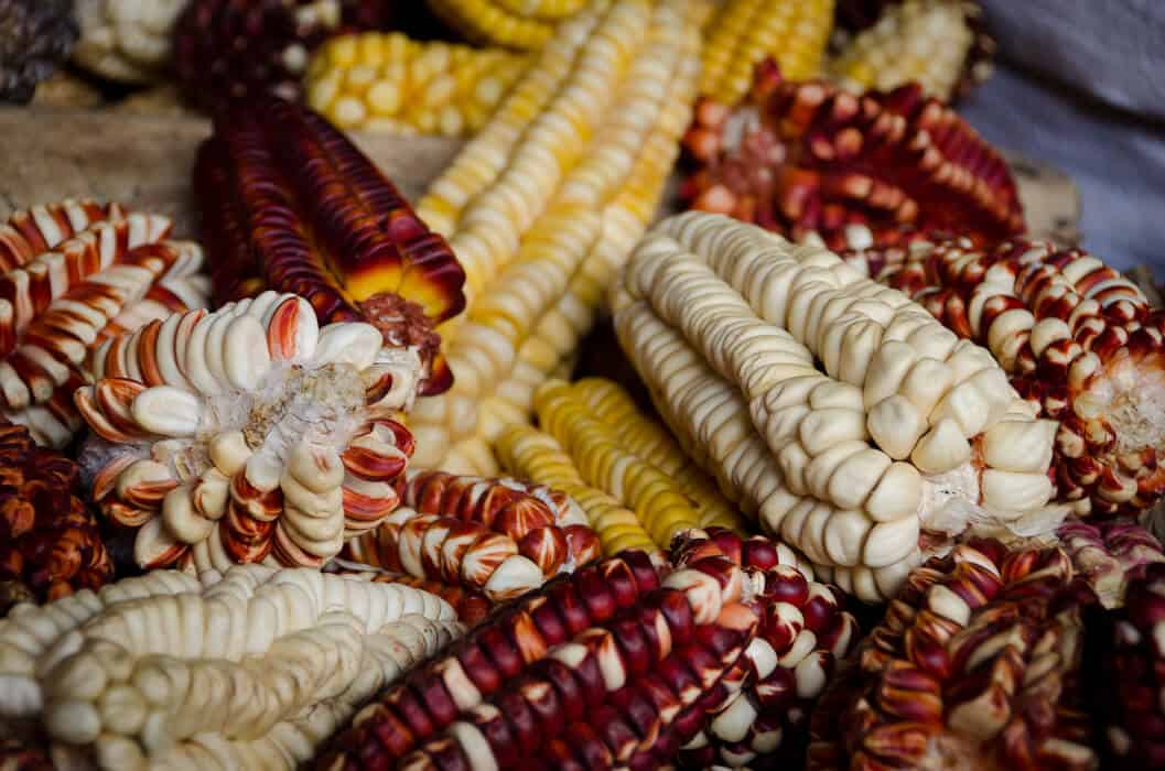 peruvian-corn-varieties