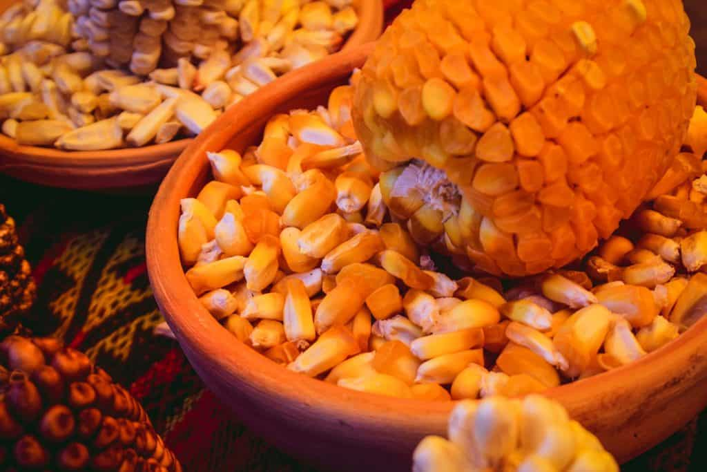 maiz-chullpi-corn-from-peru