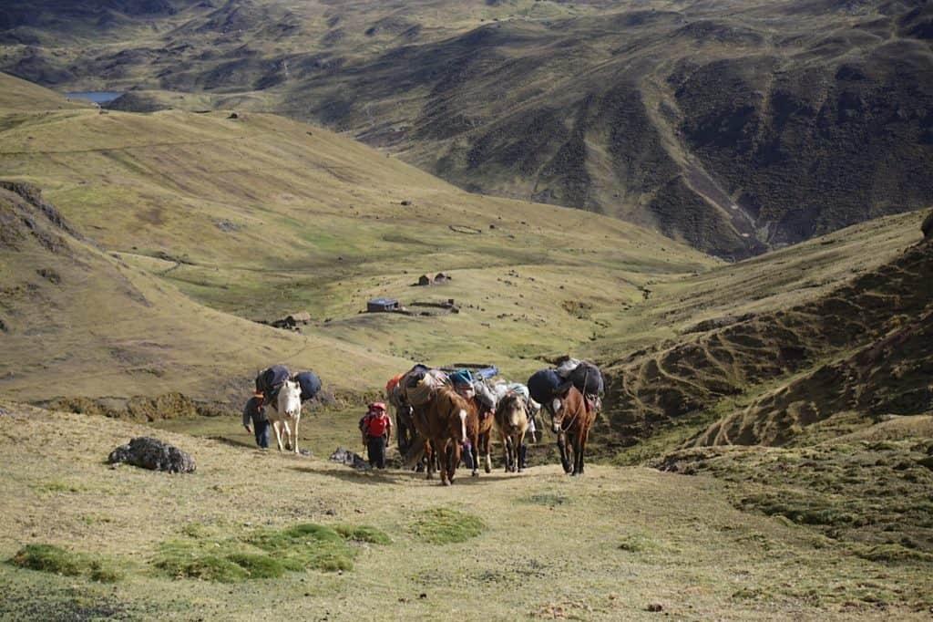 Lares-machu-picchu-horses