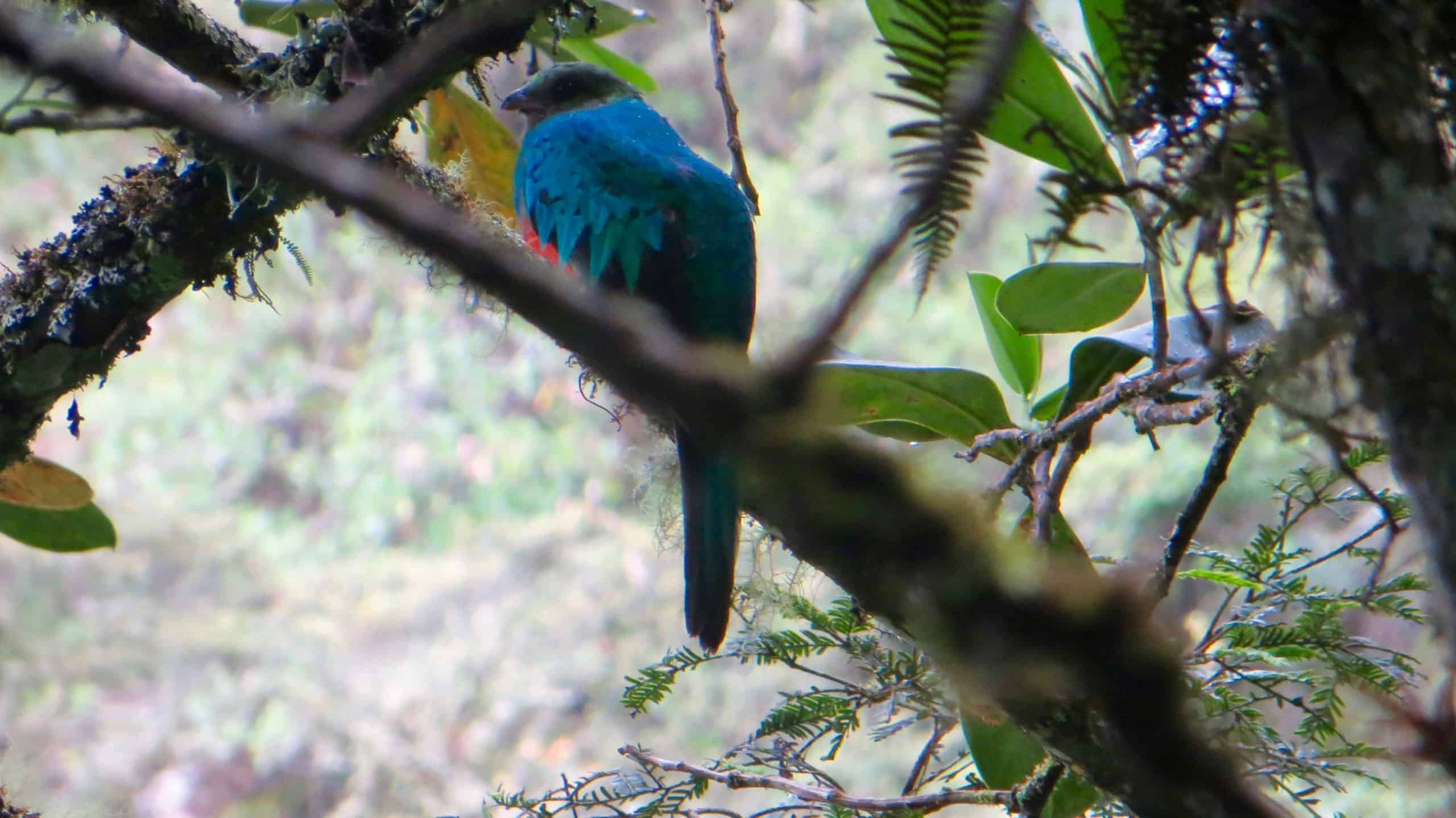 8Jesus and his family spot a quetzal