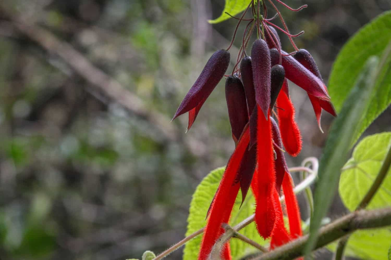 inca-trail-flora
