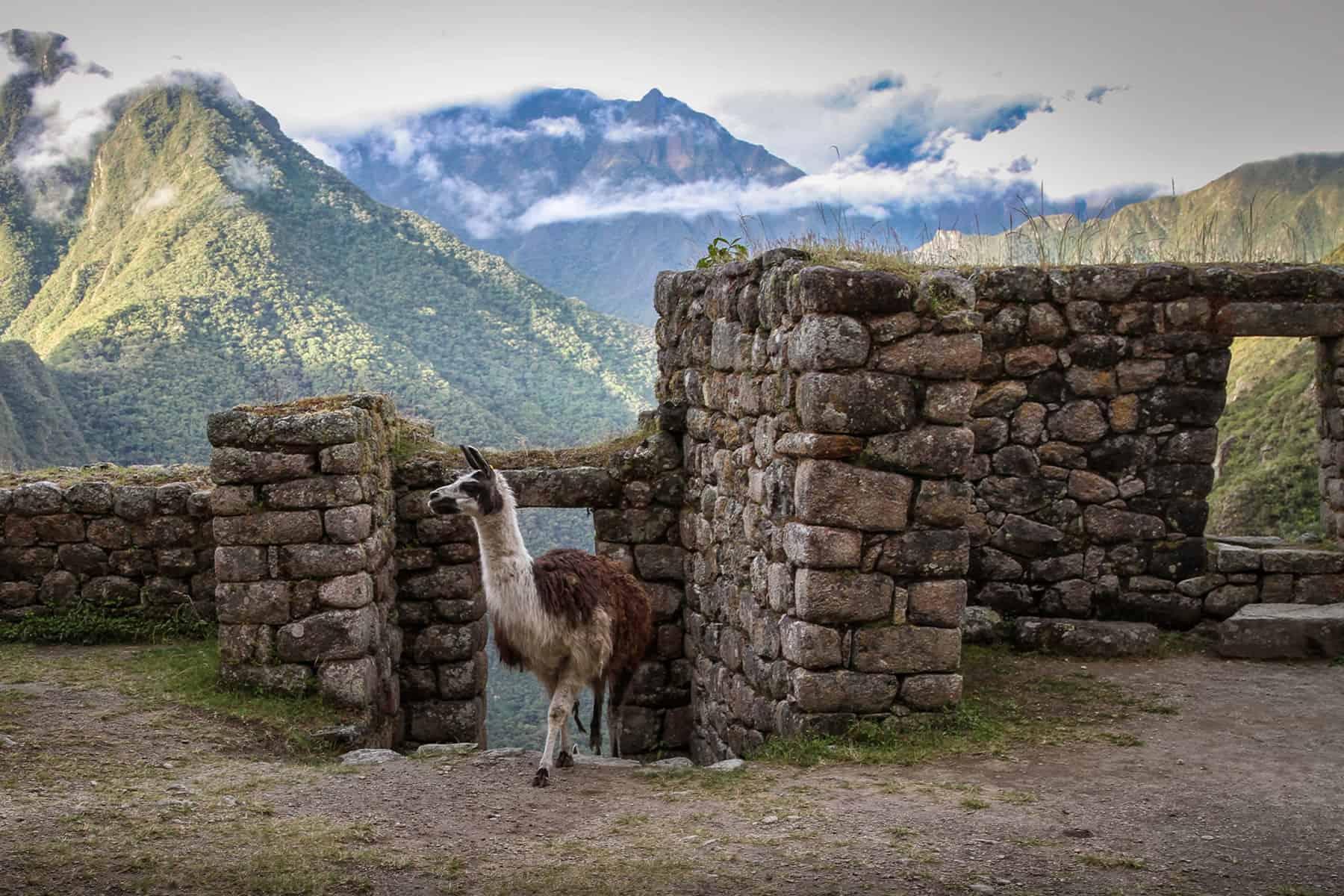 inca-trail-5d-ruins