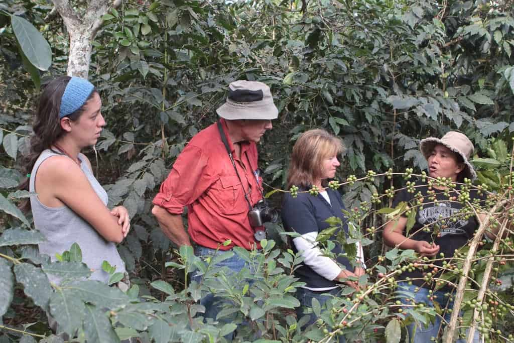 Lucmabamba homestay learn about coffee