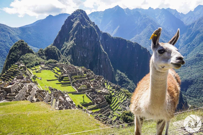 llama-at-Machu-Picchu