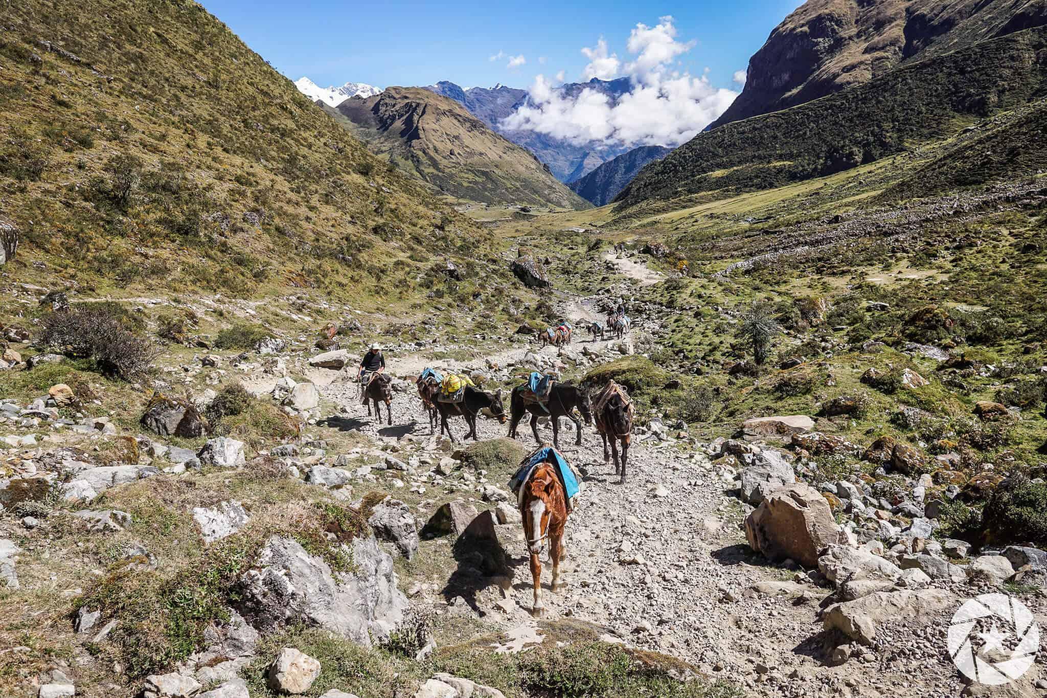 Salkantay Trail with horses